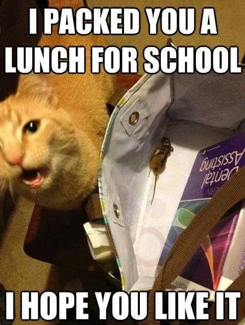 Kitty Packed You A Lunch ;)