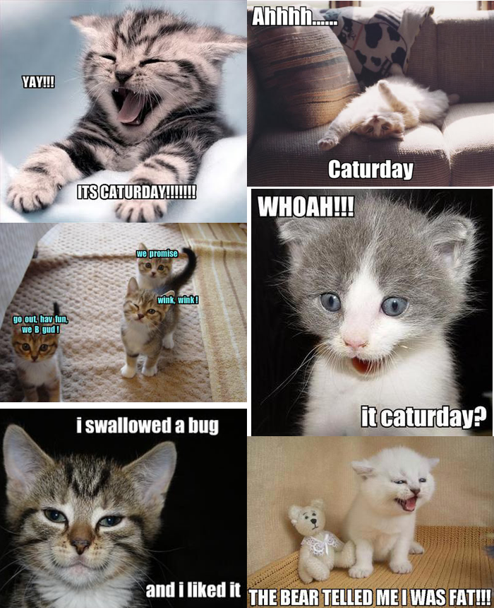 #CatMemes - It's Caturday!