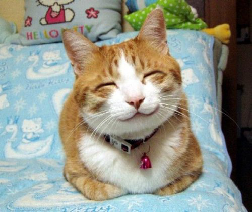 7 Smiling Cats/Kittens