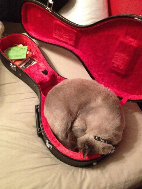 7 Cats Caught Sleeping In Strange Places