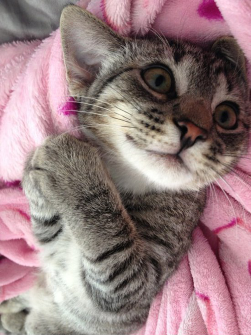 7 Cute Cats Begging