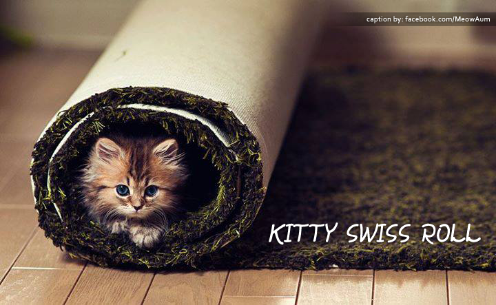 Kitty Swiss Roll