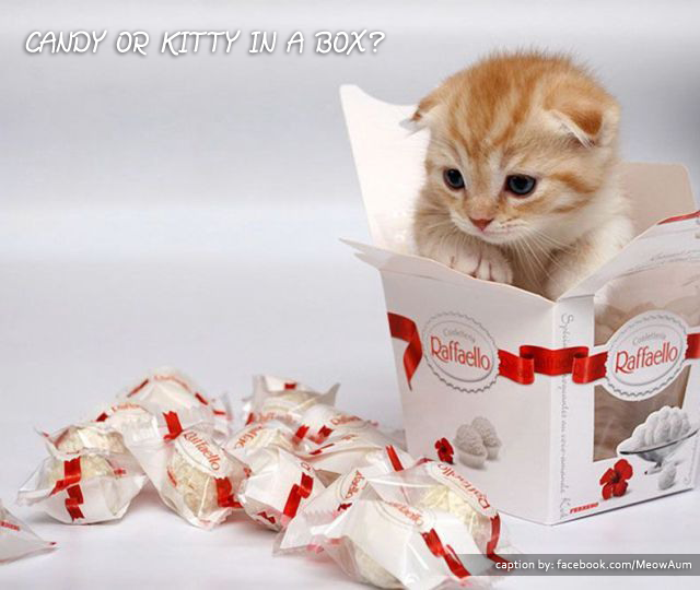 Candy or Kitty in a Box?