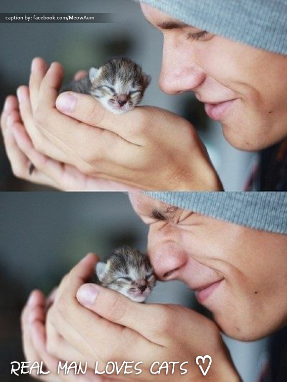 Real Man Loves Cats