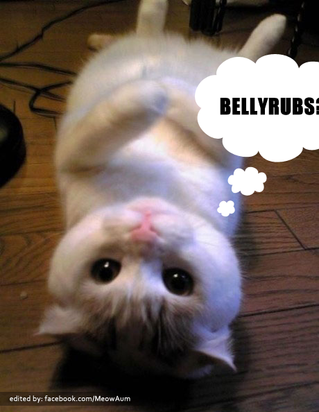 A Cute Kitten Hoping For Bellyrubs ;)