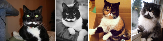 Cats With Mustache