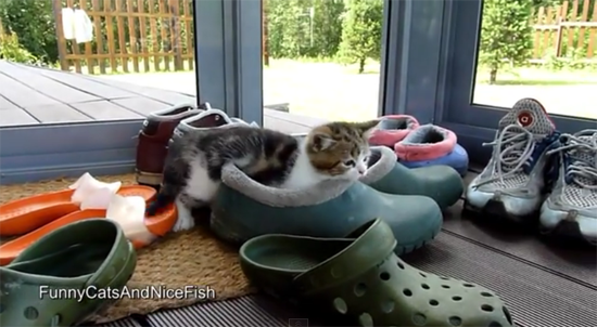 Kitten Playing with Shoes