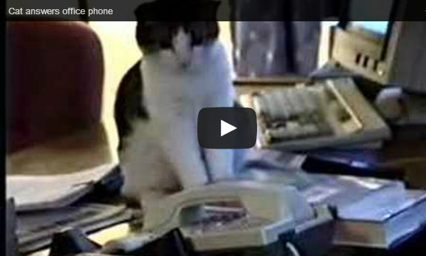Cat Answers Office Phone