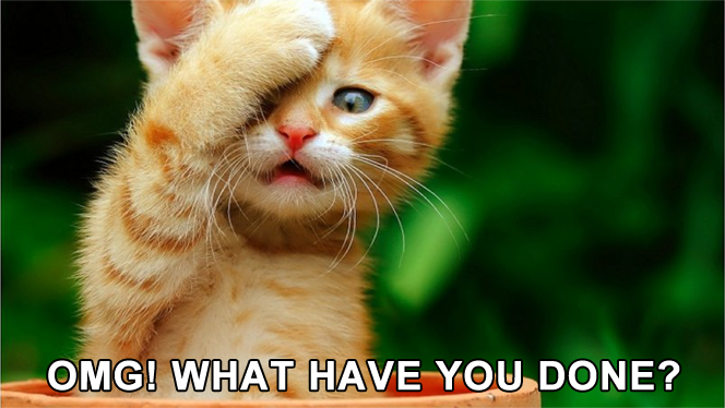 #CatMemes - OMG! What have you done?