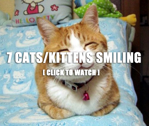 7 Smiling Cats/Kittens :)