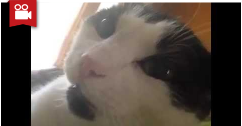 """Cat Says """"I Love You"""""""