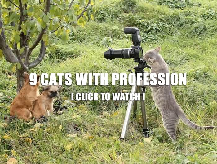 9 Cats With Profession