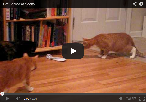 Cat Scared Of Socks