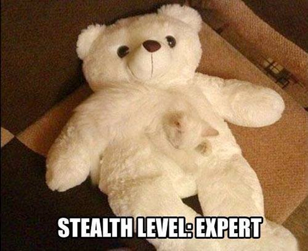 Cat Stealth Level: Expert