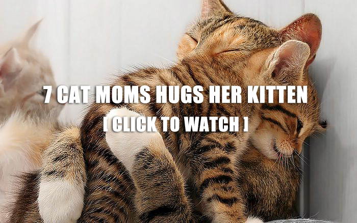 7 Pictures Of Cat Mom Hugs Her Kitten