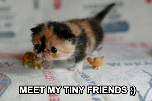 Meet My Tiny Friends ;)
