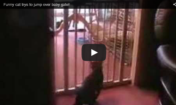 Funny Cat Tries to Jump Over Baby Gate!