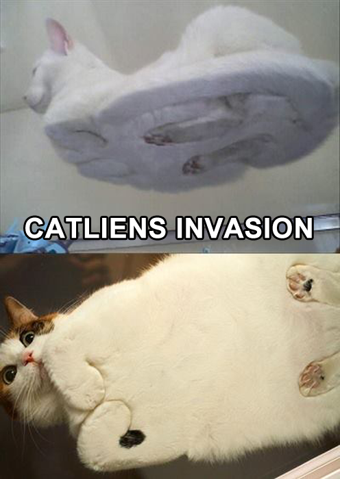 CATliens Invasion