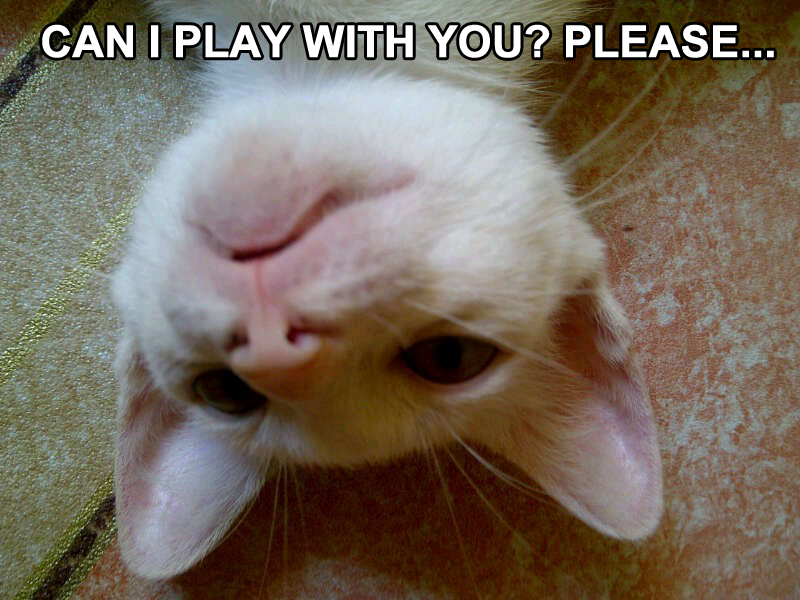 Can I Play with You? Please...