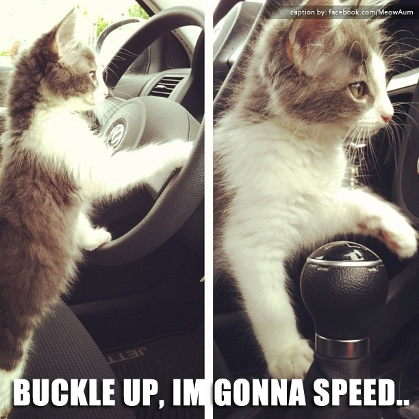 Buckle Up, I'm Gonna Speed..