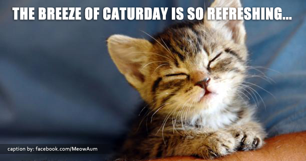 The Breeze of Caturday Is So Refreshing...