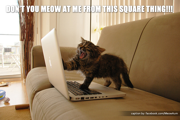 Don't You Meow At Me From This Square Thing!!!