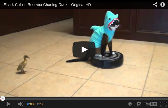 Shark Cat on Roomba Chasing A Duckling