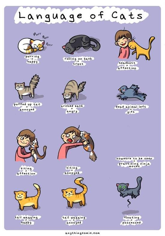 Language of Cats ;)