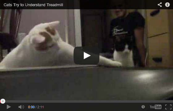 Cats Try To Understand Treadmill ;)