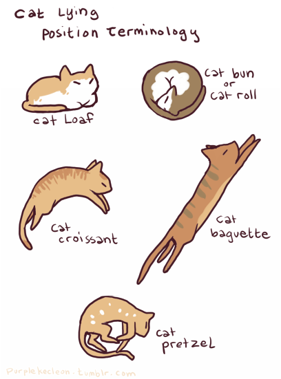 Cat Lying Position Terminology