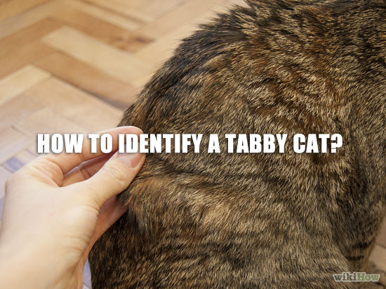 How To Identify A Tabby Cat