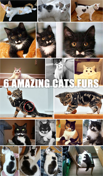 6 Amazing Cute Cat Furs