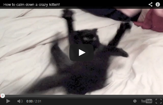 How To Calm Down A Crazy Kitten