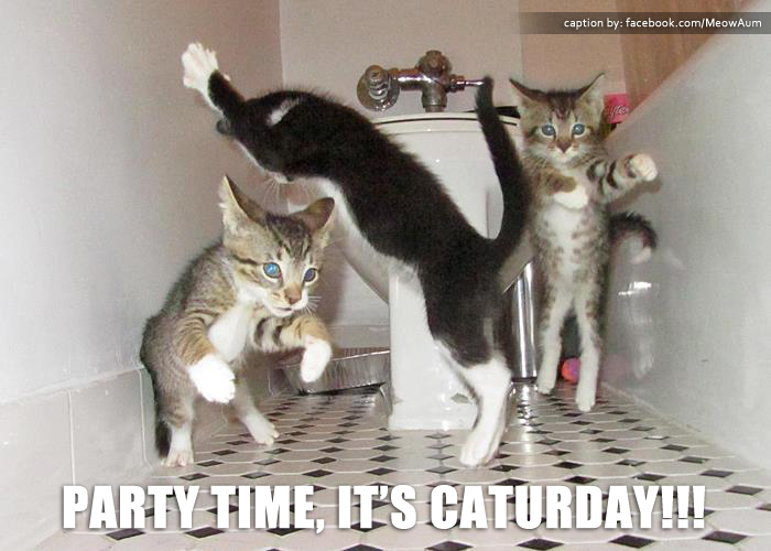 Party Time, It's CATurday!!!