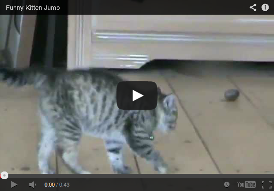 Cute & Funny Kitten Jump