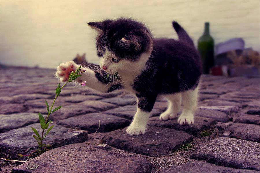 Adorable Kitten Touching The Flower