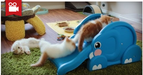Kittens Slide Down Elephant's Trunk