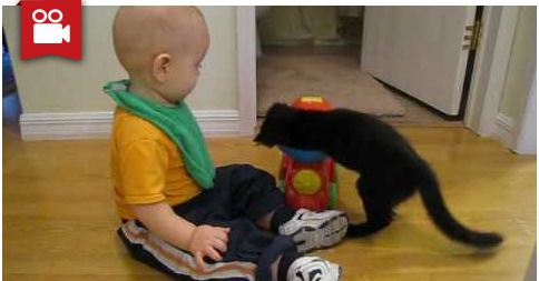 Baby & Kitten: Learning to Share