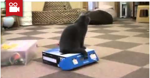 Bully Cat Traps Another Cat In A Box