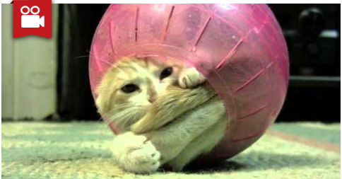Kitten Love To Play Inside The Hamster Ball