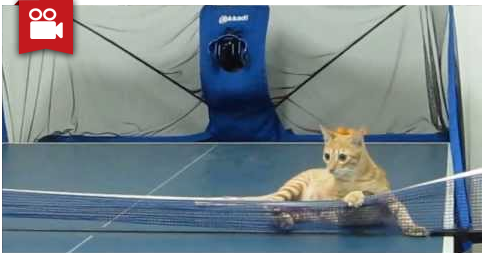Smart Cat Playing Ping Pong