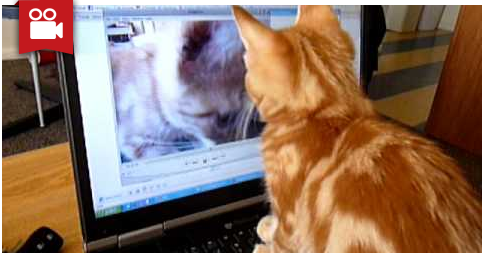 Confused Kitten Watching Video of Himself