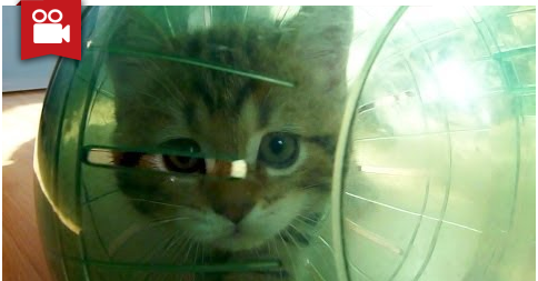 Funny Cats and Hamster Ball Adventures
