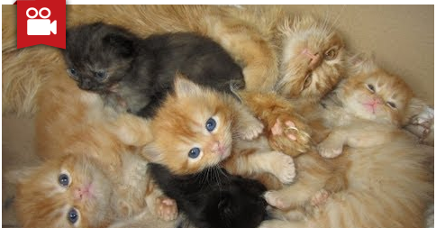 Baby Kittens and Their Big Brother Marmalade