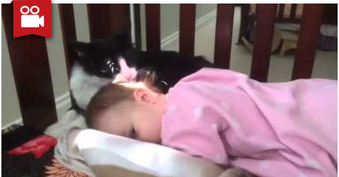 Cat Decides to Give This Baby a Bath