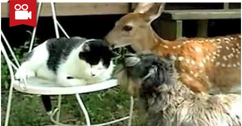 Sweet Deer Licks Kitty