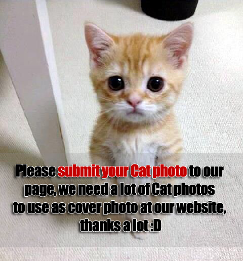 Cat Photos Needed