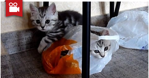 Funny Kittens vs Bags - Funny Cats