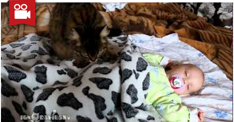 Cute Kitty Gives Baby a Warm Massage