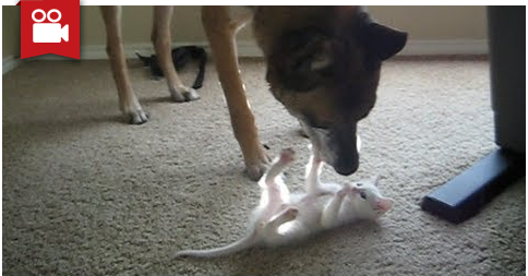 Retired Military Working Dog Discovers First Kitten